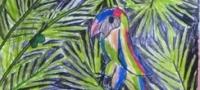regenboog muurtje jungle 2