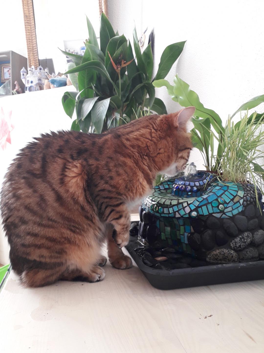 katten drinkfontein mozaiek